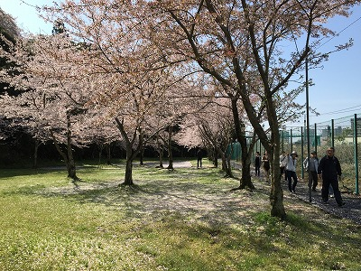 sakurawalking2.jpg