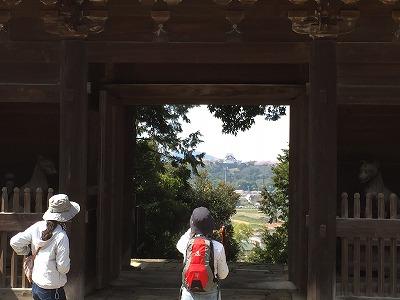 sakurawalking4.jpg